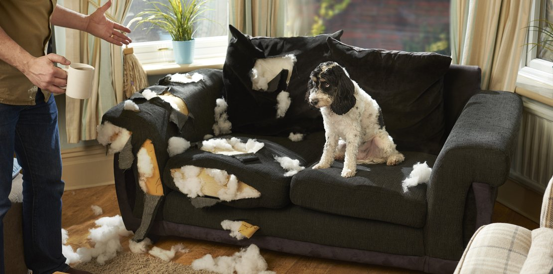 The dog ate my couch. Will my home insurance policy cover it?
